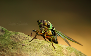 Cicada Summer by XBrokenXPorcelainX