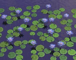 Blue Lotus WP by parrotdolphin