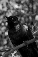 quoth the raven by serasfan