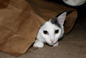 The Catcave by juliekswenson