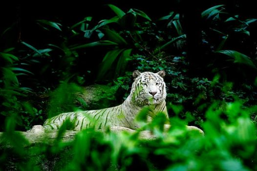 Ghost of the Jungle by designingrossa