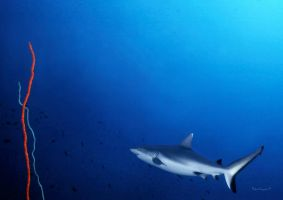 Shark and Coral Whips by LazyDugong