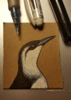 Guillemot (Winter Plumage) by wingedwolf94