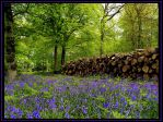 Logging amongst the Bluebells by parallel-pam