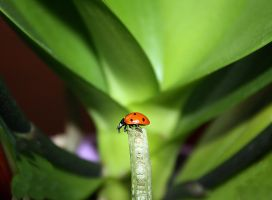 Adventuring Ladybug by maryephotography
