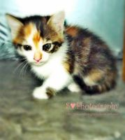 Lil' cat... by SimonaPhotography