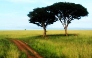 Africa's Way by planBruno