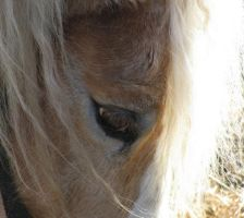 Horse's eye by Fanciful24