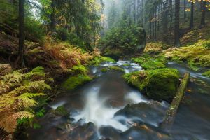 Bohemian Rainforest by TobiasRichter