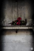 Dead rose by sylvaincollet