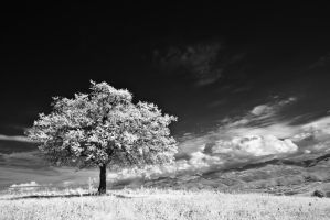The tree - IR photo II by rott-man