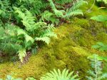 moss and ferns by Ladywriter