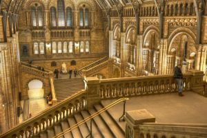 National History Museum 3 by vortxbr