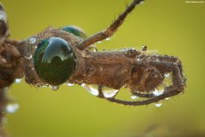 Contact Lenses by erezmarom