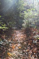 Harpers Falls Trails 1 by bryceworley