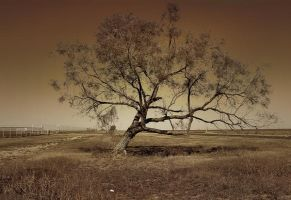 The Lone Tree by Sherjaxon