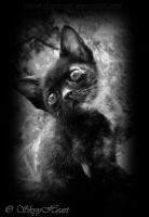 Black kitten by SkyyHeart