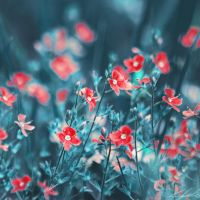 forget me not by Luxxs