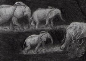 migrating elephants by trececielos