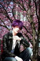 Dynamic Chord: Cherry Blossoms by raburabuReishi