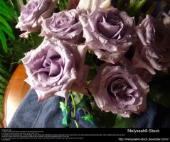 Lavender Rose Waterdroplets Stock 1 by Melyssah6-Stock
