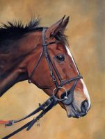 Kauto Star by DryJack