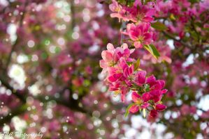 Pink Blossoms by Ashley-Noir-Cosplay