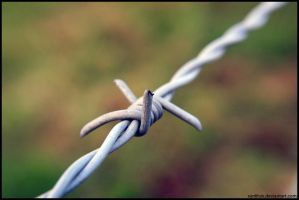 Barbed Wire I by sunlitsix