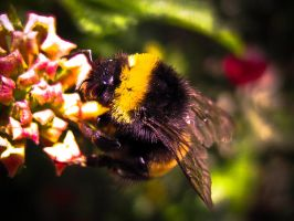 Bumble Bee by KillerZombie123