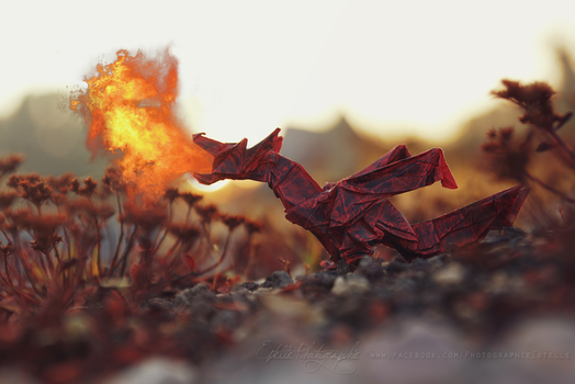 Fiery Dragon by Estelle-Photographie