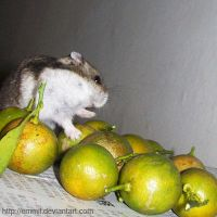 Counting limes by emmil
