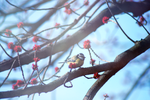.Birds bring the Spring. by Ginchen666
