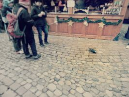 No christmas for the pidgeon. by Daenel