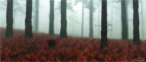 Autumn Fog by Robbedoes020