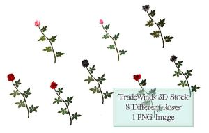TW3D Single Roses by TW3DSTOCK