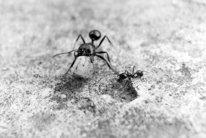 Just Like Big Ants Do by Youcef07