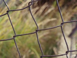 wire fence by VioletSuperman