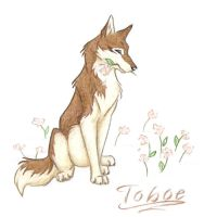 Tribute To Toboe by WildSpiritWolf