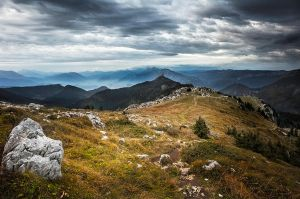 Chartreuse by JPGphotos