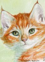 ACEO Ginger kitten by sschukina