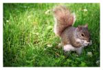 Squirrel by igelkotten