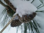 Pinecones in the Winter by olivia808