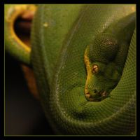 Emerald Tree Boa 1 by Globaludodesign