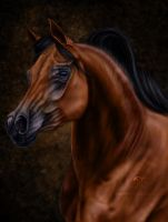 Arabian Stallion by AnaMartaLoura