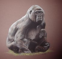Lowland Gorillas by Sasquatch69