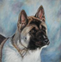 Akita in pastel by Eline-portraits