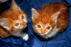 Abandoned Kittens HDR by pantsonnos