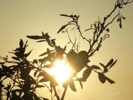 A heart in the sun by anasoriano