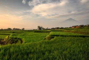 Green Layers by adityapudjo