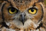 Owls Eyes by photographybypixie